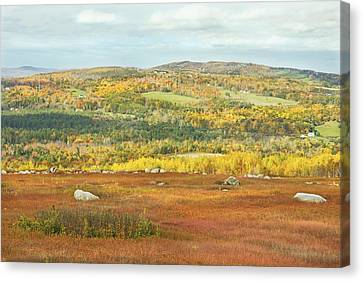 Autumn Colors In Maine Blueberry Field And Forest Canvas Print by Keith Webber Jr