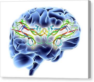 Brain-derived Neurotrophic Factor Canvas Print by Alfred Pasieka