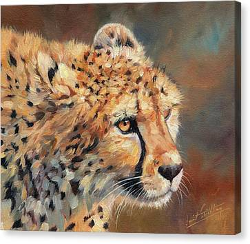Cheetah Canvas Print - Cheetah by David Stribbling