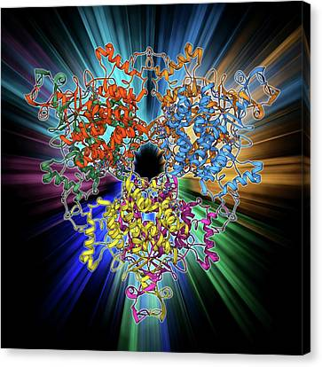 Citrate Synthase Molecule Canvas Print by Laguna Design