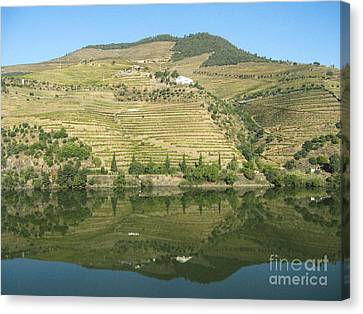 Canvas Print featuring the photograph Douro River Valley by Arlene Carmel