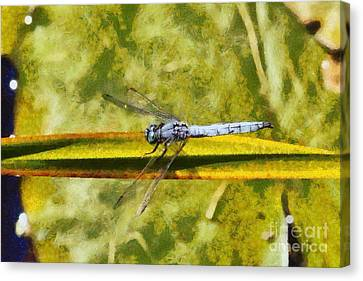 Dragonfly Canvas Print by George Atsametakis