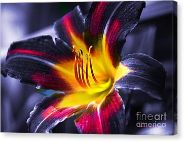 Flower Burst Canvas Print by Gunter Nezhoda