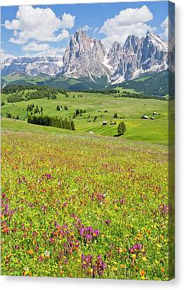 Flowery Alpine Meadow Canvas Print by Bob Gibbons