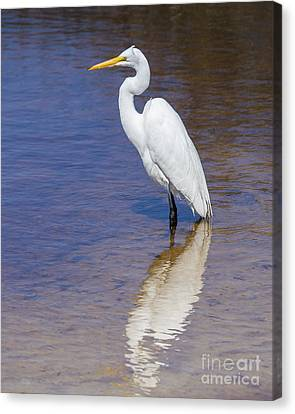 Great Egret Canvas Print by Twenty Two North Photography