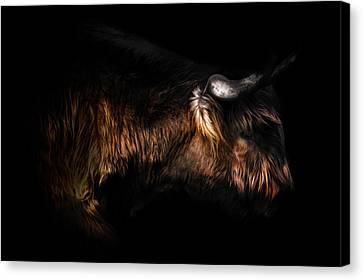 Cow Canvas Print - Highland Cow by Ian Hufton
