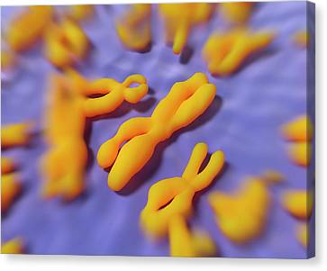 Chromosome Canvas Print - Human Chromosomes by Alfred Pasieka