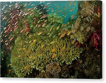 Indian Ocean, Indonesia, Raja Ampat Canvas Print by Jaynes Gallery