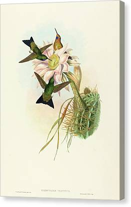 Glowing Canvas Print - John Gould And H.c by Quint Lox