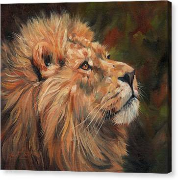 Lion Canvas Print by David Stribbling