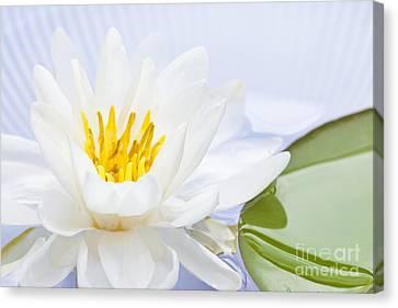 Lotus Flower Canvas Print by Elena Elisseeva