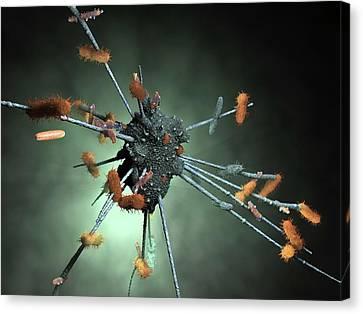 Macrophage Engulfing Bacteria Canvas Print by Hipersynteza