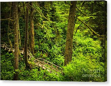 Vancouver Island Canvas Print - Path In Temperate Rainforest by Elena Elisseeva