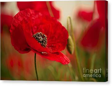 Red Skies Canvas Print - Poppy Dream by Nailia Schwarz