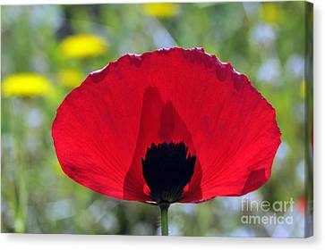 Poppy Flower Canvas Print by George Atsametakis