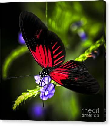 Doris Canvas Print - Red Heliconius Dora Butterfly by Elena Elisseeva