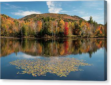 Autumn Leaf On Water Canvas Print - Reflection Of Trees On Water by Panoramic Images