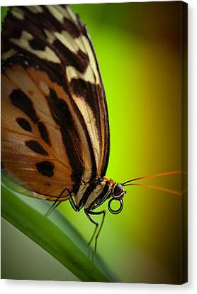 Canvas Print featuring the photograph Resting Butterfly by Zoe Ferrie