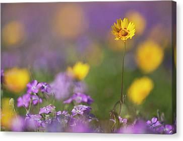 Roadside Wildflowers In Texas, Spring Canvas Print