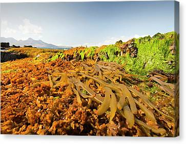 Rock Formations At The Bay Of Laig Canvas Print by Ashley Cooper