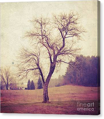 Gnarly Canvas Print - Tree by HD Connelly