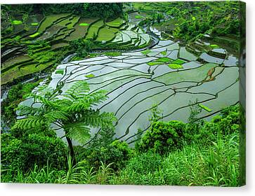 Michael Canvas Print - Unesco World Heritage Site, Rice by Michael Runkel