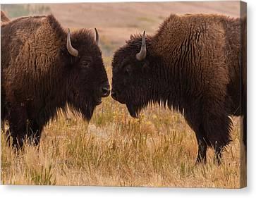 Usa, South Dakota, Custer State Park Canvas Print
