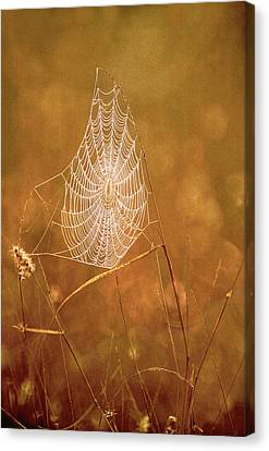 Web Gallery Canvas Print - Usa, Texas, Rio Grande Valley, Mcallen by Jaynes Gallery