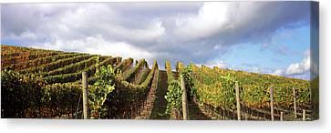 Vineyard, Napa Valley, California, Usa Canvas Print by Panoramic Images