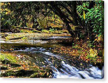 Trout Stream Landscape Canvas Print - Williams River Headwaters by Thomas R Fletcher