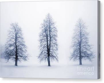 Winter Trees In Fog Canvas Print by Elena Elisseeva