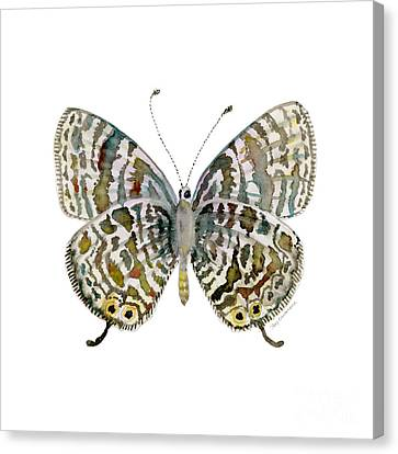 51 Lang's Short-tailed Blue Butterfly Canvas Print