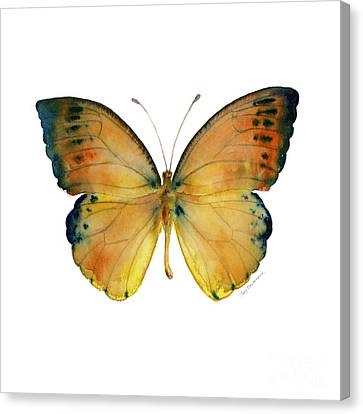 53 Leucippe Detanii Butterfly Canvas Print