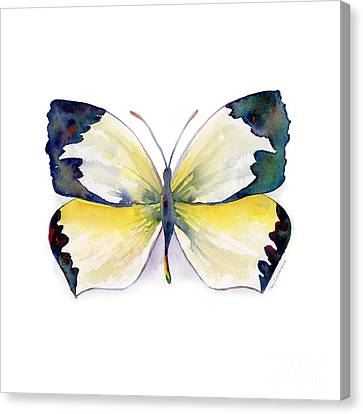 Yellow Butterfly Canvas Print - 55 Mexican Yellow Butterfly by Amy Kirkpatrick
