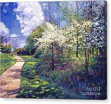 Dogwood Trees In Bloom Canvas Print