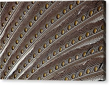 Argus Pheasant Wing Feather Design Canvas Print by Darrell Gulin