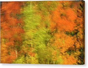 Wind Blown Tree Canvas Print - Canada, Alberta, Banff National Park by Jaynes Gallery