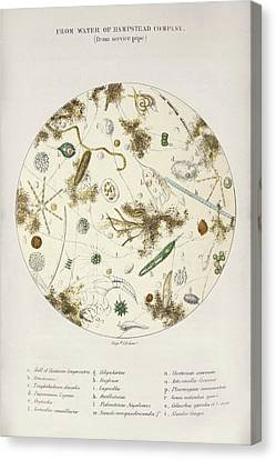 Cholera Epidemic Research Canvas Print by British Library