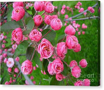 Color Of The Spring Canvas Print