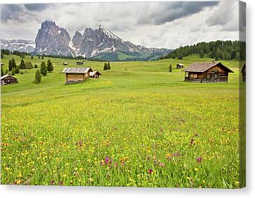 Flowery Alpine Meadow Canvas Print