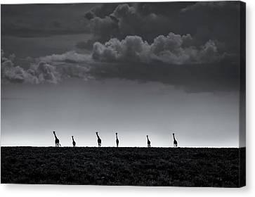Dark Clouds Canvas Print - 6 Giraffes by Greg Metro
