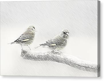 Greenfinch  Canvas Print by Heike Hultsch