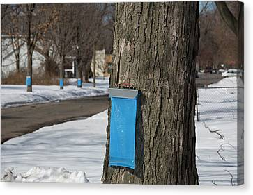 Maple Syrup Production Canvas Print
