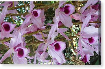 Orchids--dendrobium Canvas Print