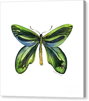 6 Queen Alexandra Butterfly Canvas Print by Amy Kirkpatrick