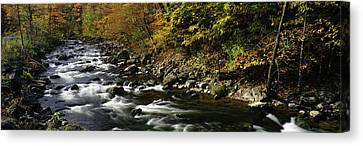River Flowing Through A Forest Canvas Print
