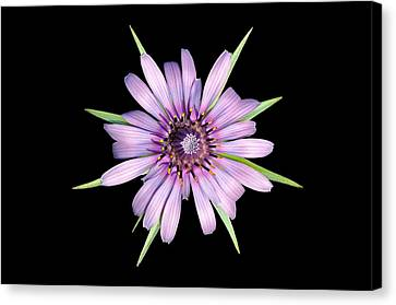 Salsify Flower Canvas Print by George Atsametakis