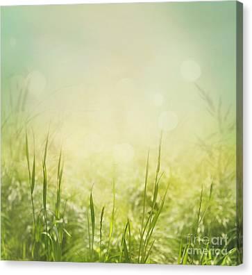 Spring Background Canvas Print by Mythja  Photography