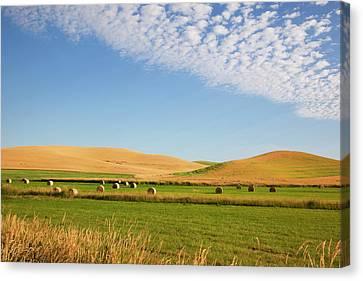 Wa, Whitman County, Palouse Farmland Canvas Print