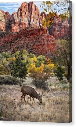 Zion National Park Canvas Print by Utah Images